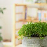 湘南ひらつか整体院の観葉植物