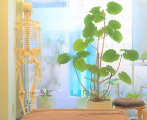 湘南ひらつか整体院の整体スペースと解剖学チャート